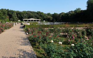 神代植物園のバラ園